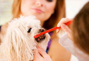pet dentists, peoria